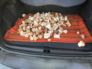 Ein Kofferraum voller Pilze für die BewohnerInnen des ÖJAB-Hauses St. Franziskus in Güssing.